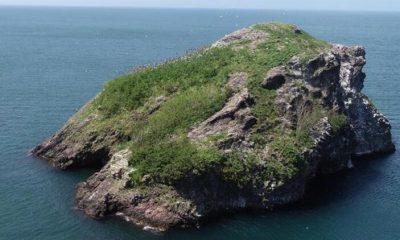 Ordu Hoynat Adası'na ziyaretçi akını