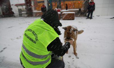 Altınordu Belediyesi sokak hayvanlarını unutmadı