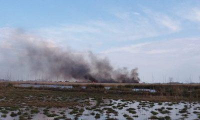 Simenit Gölü'nde yangın: Çok sayıda hayvan telef oldu