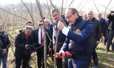 """Vali Yavuz: """"Fındık üretimi yüzde 10 artarsa, 400 milyon lira ek gelir olur"""""""
