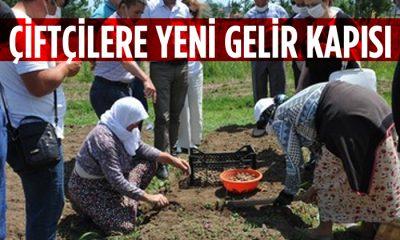 Samsun'da Çiftçilere Tohum Desteği Başladı