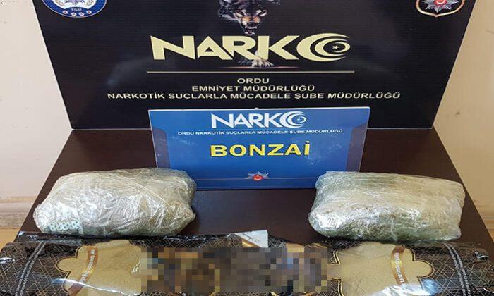 Ordu'da uyuşturucu operasyonu: 1 tutuklama